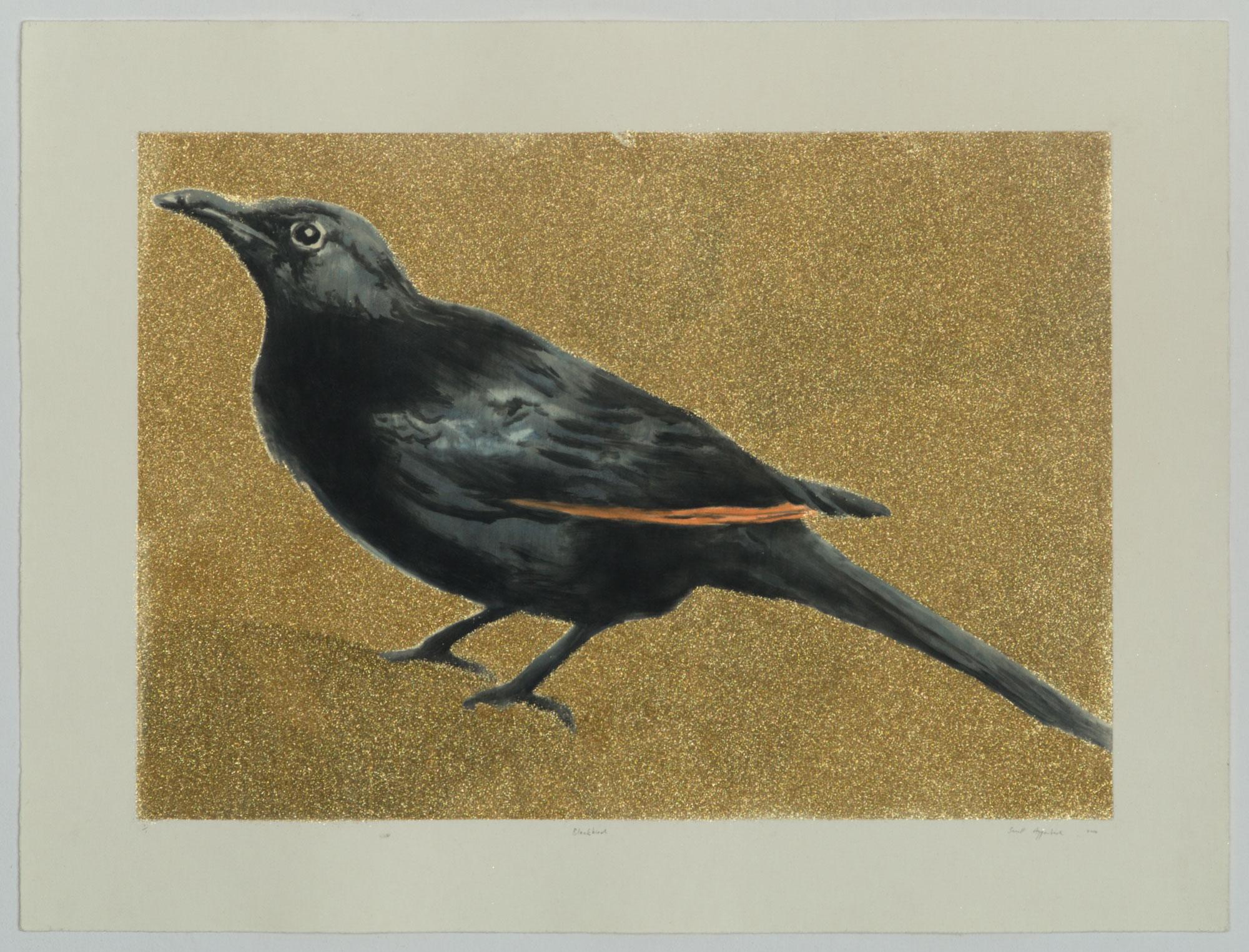 SA_Blackbird-L16sfweb