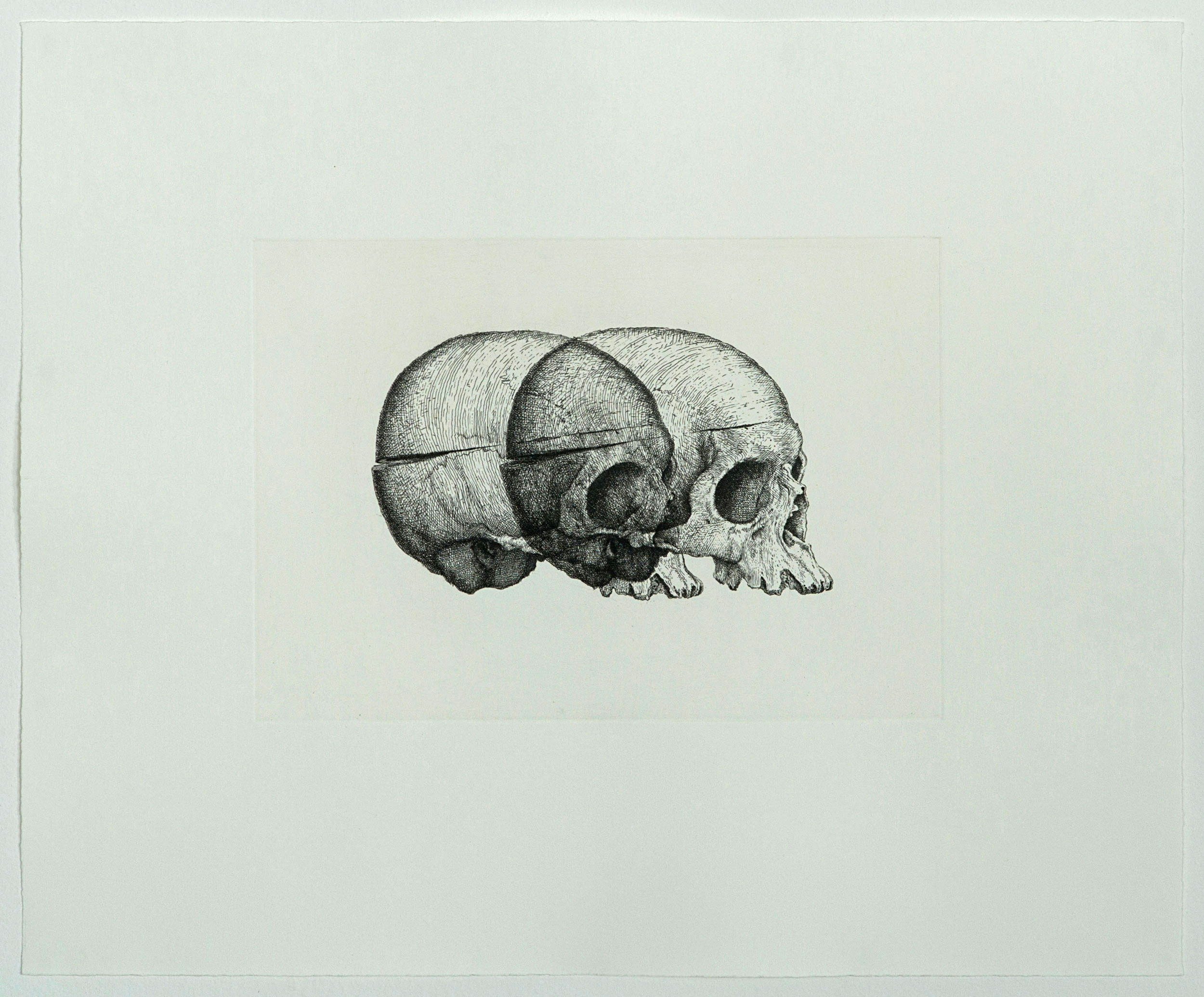 Gerhard Marx, Prints, Binocular Skull 2
