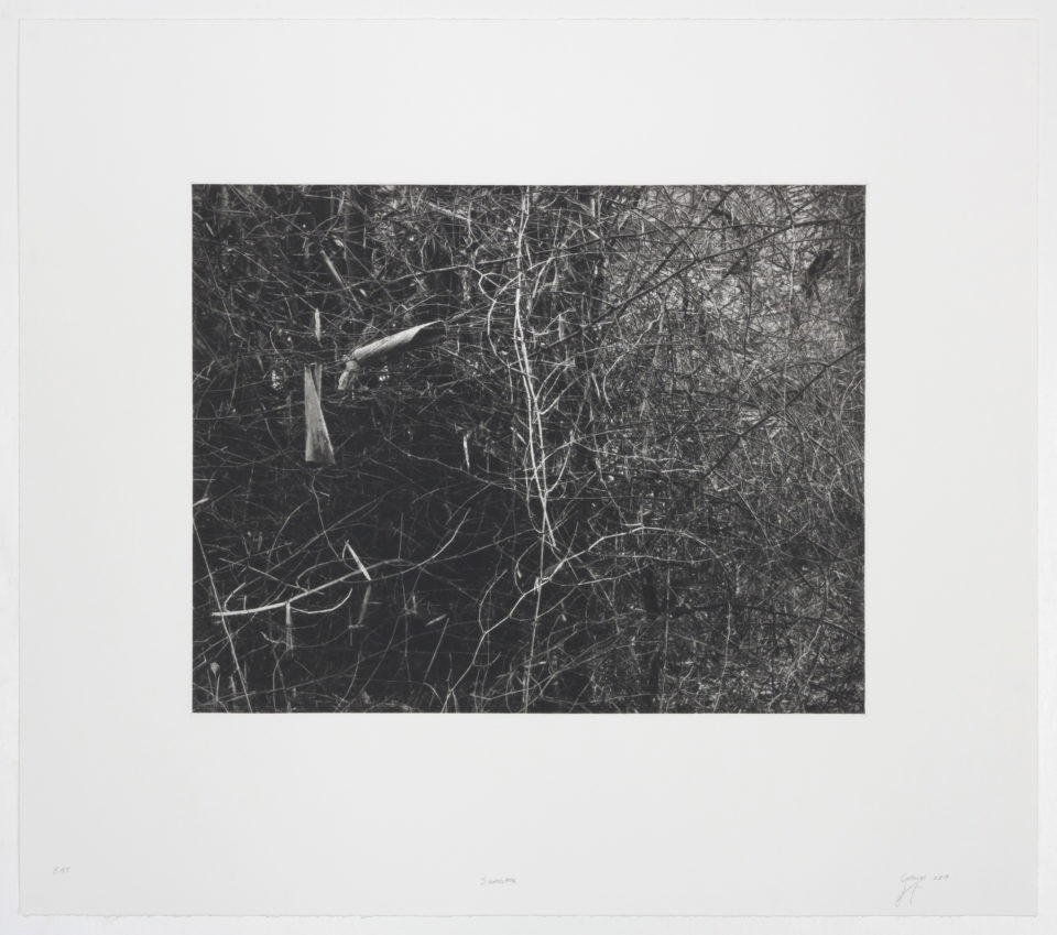 Prints, Photogravure, Heliogravure, Copperplate Photogravure, Intaglio